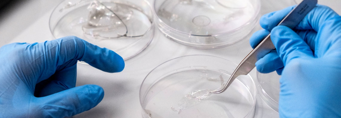 The gloved hands of a researcher work with elements in a cell-culture dish.